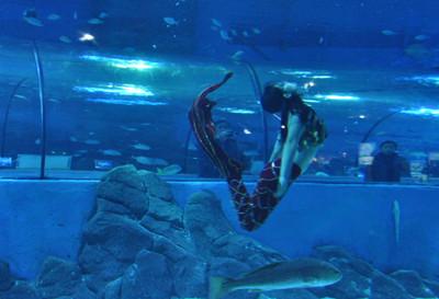 壁纸 海底 海底世界 海洋馆 水族馆 400_273