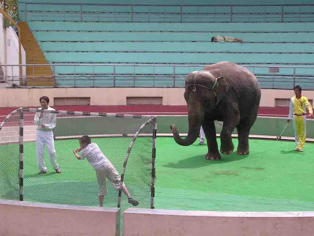 上海野生动物园门票团购