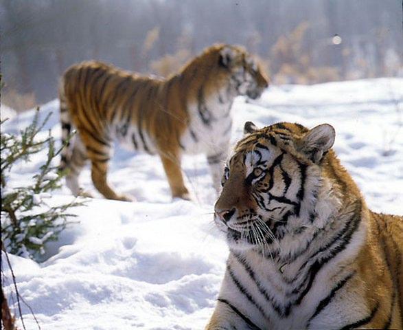 八达岭野生动物园点评_延庆景点_发表于2013年3月25日