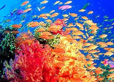 秦皇岛新澳海底世界是国家4a级景区,全国科普教育基地.