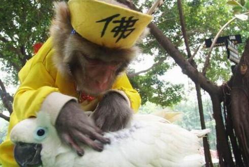 深圳野生动物园门票团购