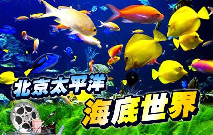 太平洋海底世界果然比动物园的海洋馆好玩多了,虽然地方也不大,但是