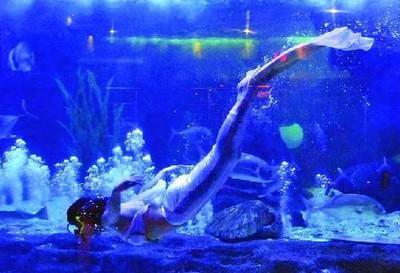 义务海洋世界已包含义务乐园大门票,义乌乐园项目自理