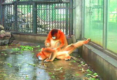 南京红山森林动物园网上订票