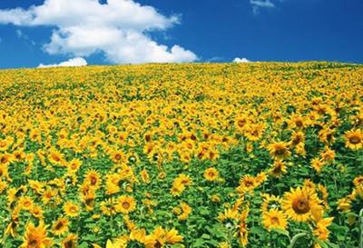 南山植物园内荟萃了中外名贵花卉1000余种,是海棠花,桂花,樱花,梅花