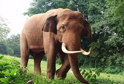 东莞香市动物园点评_东莞市区旅游景点_发表于2014年6